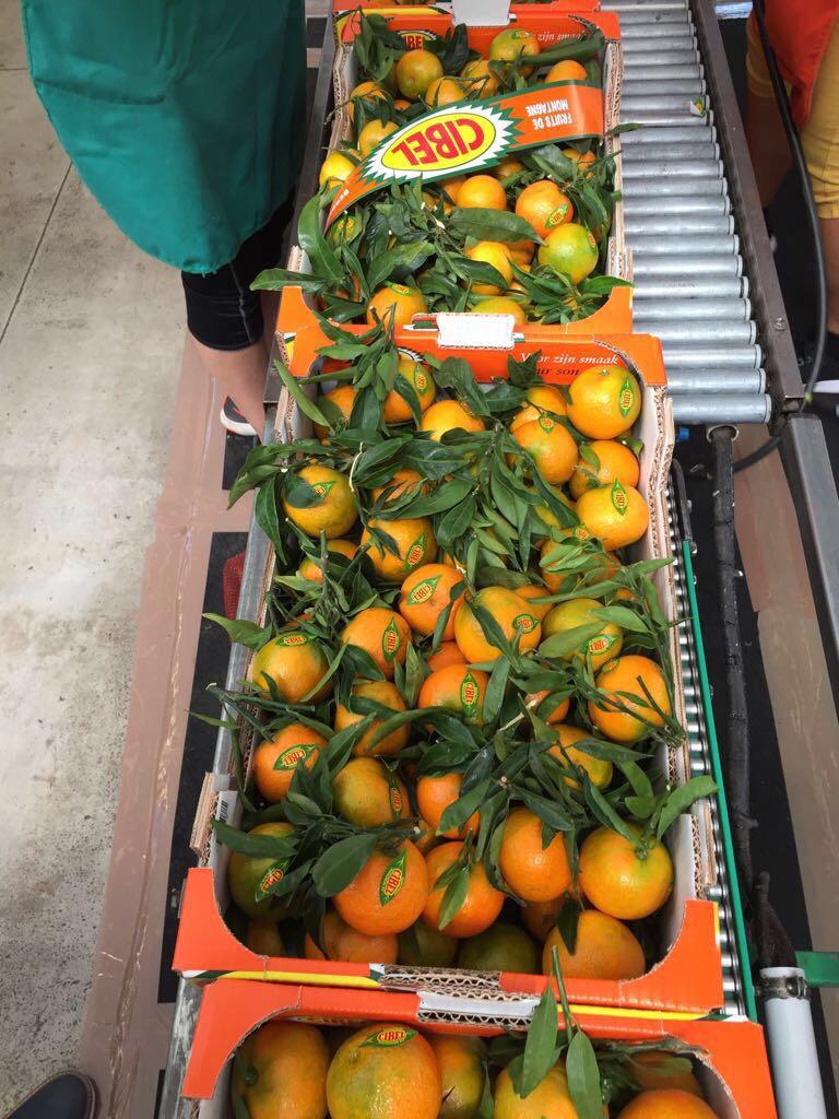 Eerste Spaanse clementines zijn op weg!